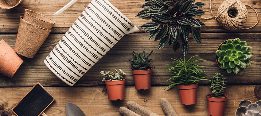 It's Party Thyme: 7 Products for Plant Lovers